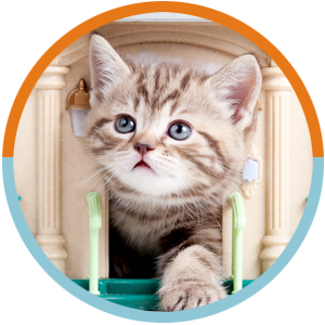 Cats Services Circles – kitten in door