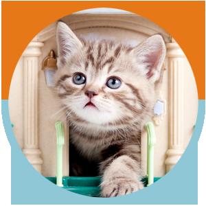 Cats Services Circles – kitten in door