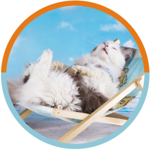 Cats Services Circles – vacation cat