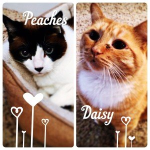 Daisy and Peaches