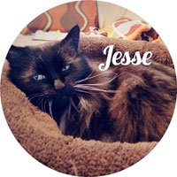 Jesse, Senior Vice President in charge of Napping and Hairball Discharge
