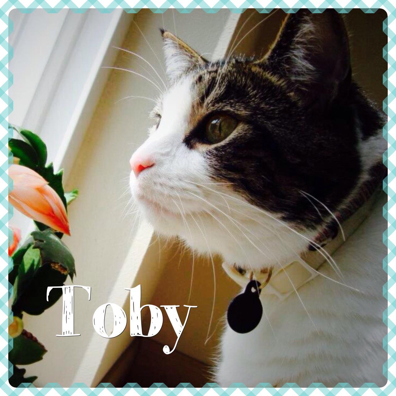 Toby-web