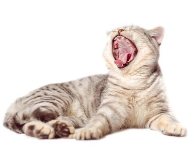 5-vocalizations