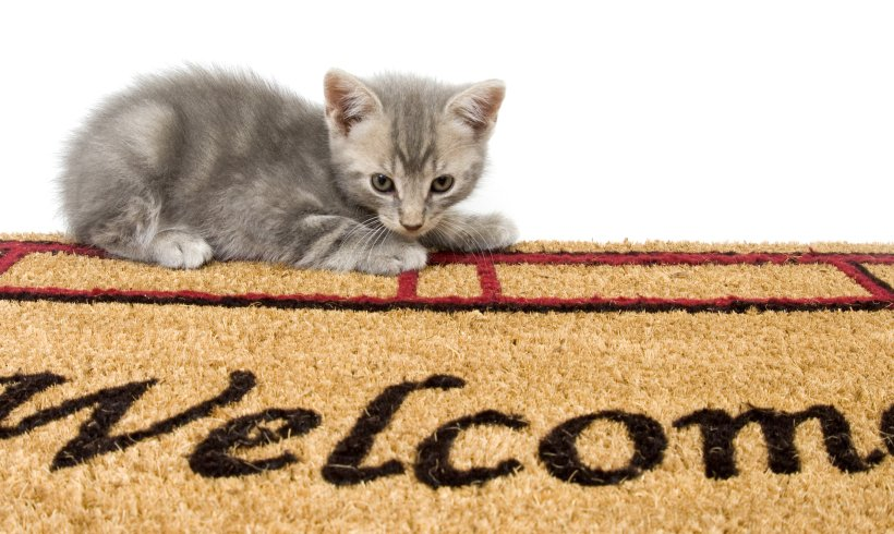 Welcome to Feline Behavior Solutions!