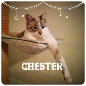 Chester appears calm, but watch out!