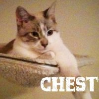 Chester: A Little Cat with BIG Cat Aggression!