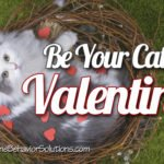 7 Ways to Be Your Cat's Valentine