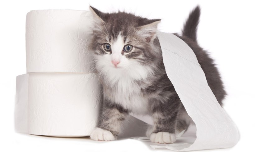 Does Your Cat Need an Extreme Litterbox Setup Makeover?