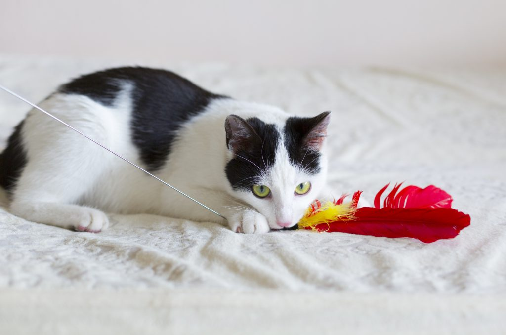 Wand toys allow your cat to go through the entire prey sequence!
