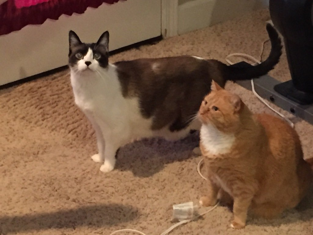 Well, look who are hanging out, not wanting to kill each other!