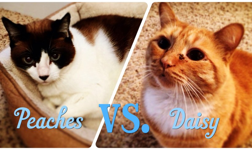 Daisy and Peaches: A Tale of Two Kitties…And Stress-Related Litterbox Issues!