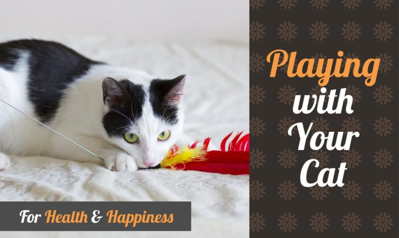 Playing with Your Cat for Health and Happiness