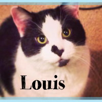 Meet Louis: A Handsome Devil with Fear Aggression