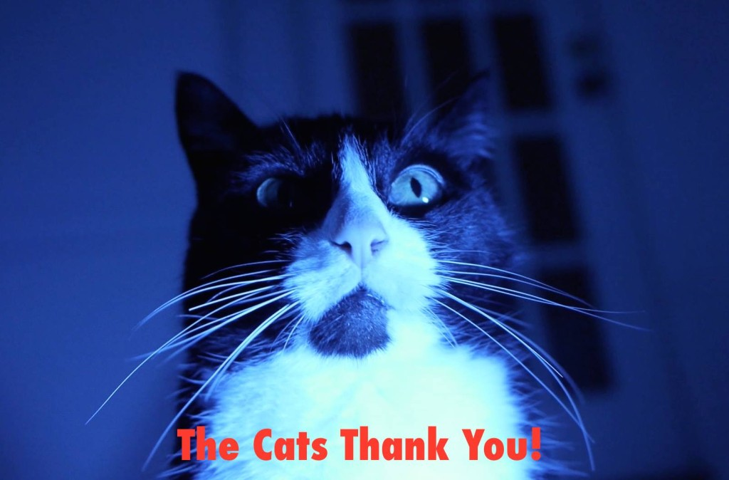 Zombie Cats From Mars Peggy Sue - Thank You
