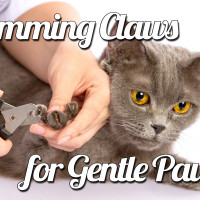 Trimming Claws for Gentle Paws