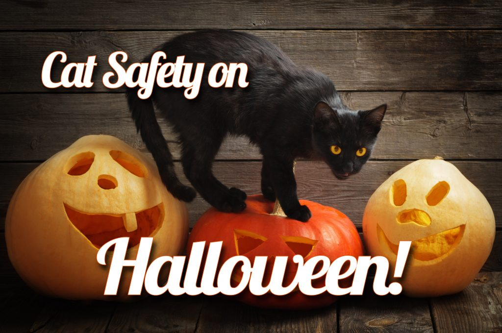 Halloween Safety Tips for Cats