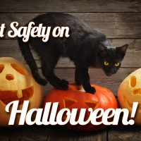 Cat Safety on Halloween – It's not that Scary!