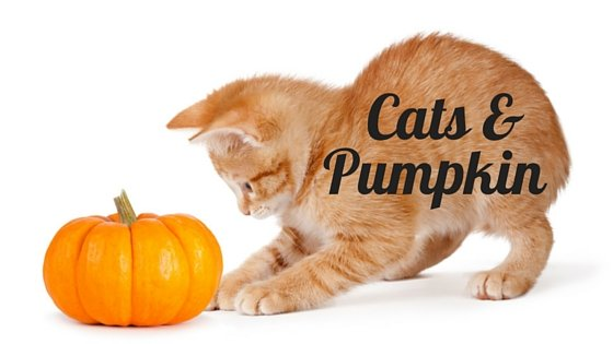 Pumpkin good for cats