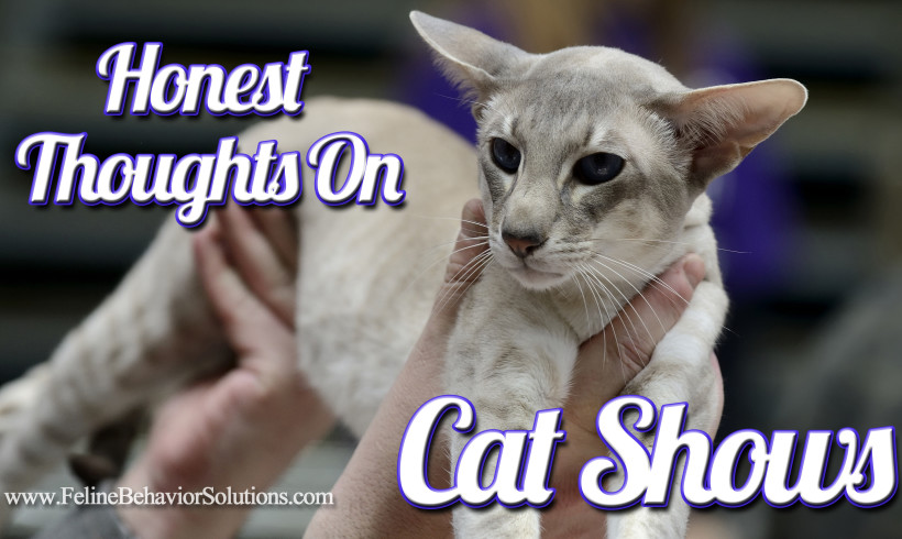 Some Honest Thoughts About Cat Shows