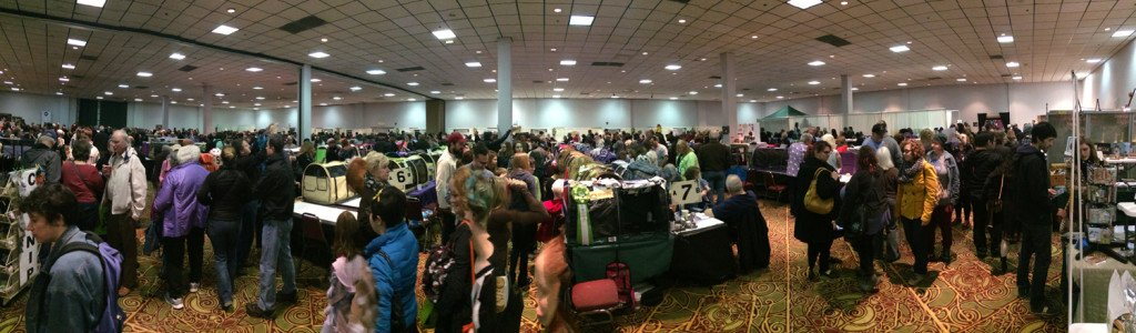 Panoramic view of the cat show.