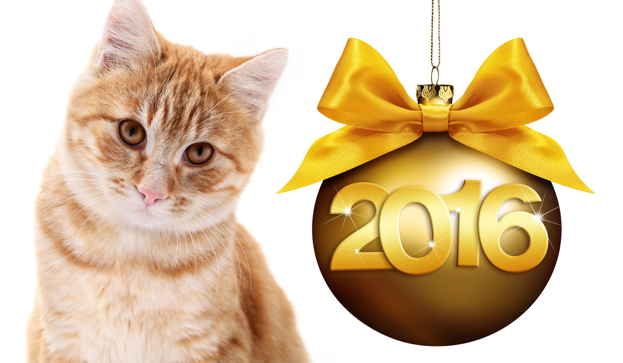 resolutions for your cat