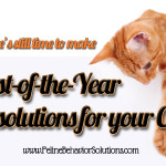 Make Rest-Of-The-Year Resolutions For Your Cat's Well-Being