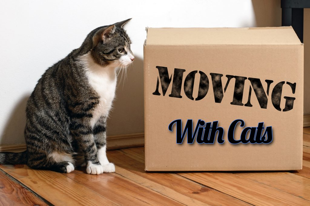 Moving With Cats