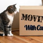 Moving With Cats: The Secret is Planning Ahead