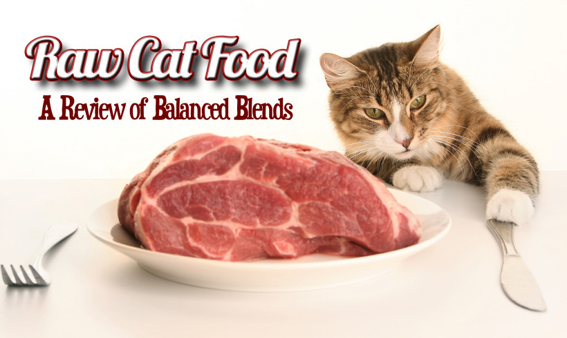 Raw Cat Food – A Review of Balanced Blends