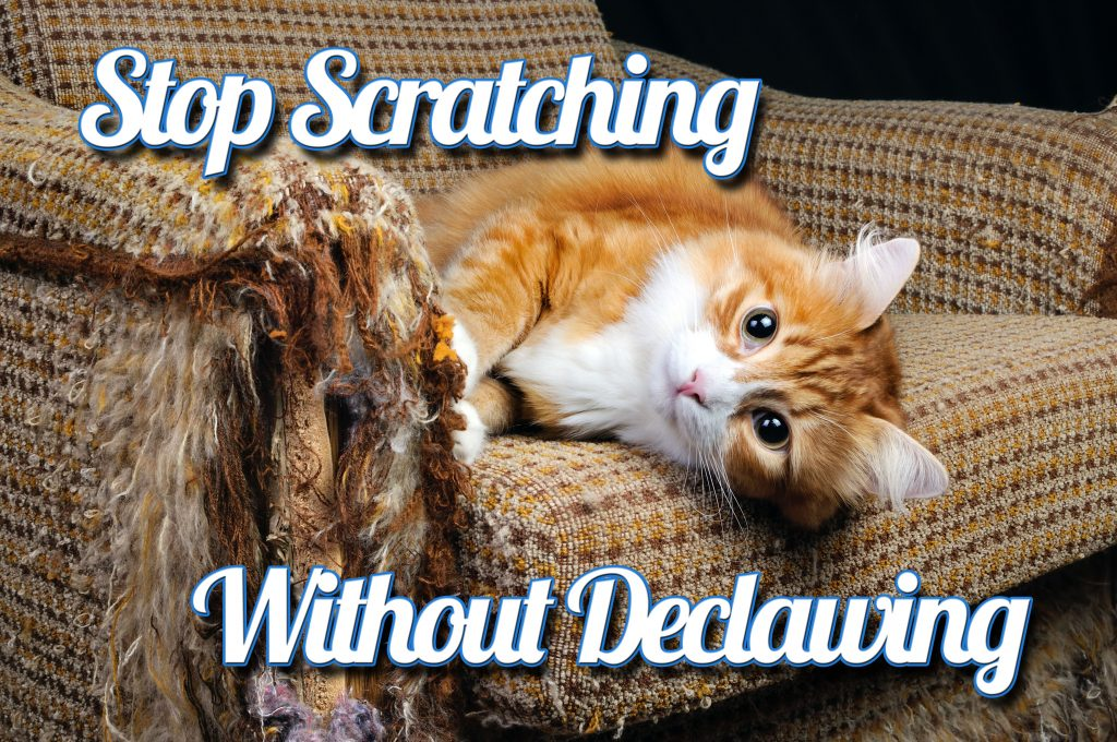 Stop Scratching Without Declawing