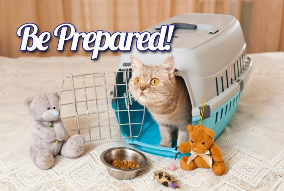 Pet Preparedness for Disasters: Guest Post by Jo Becker
