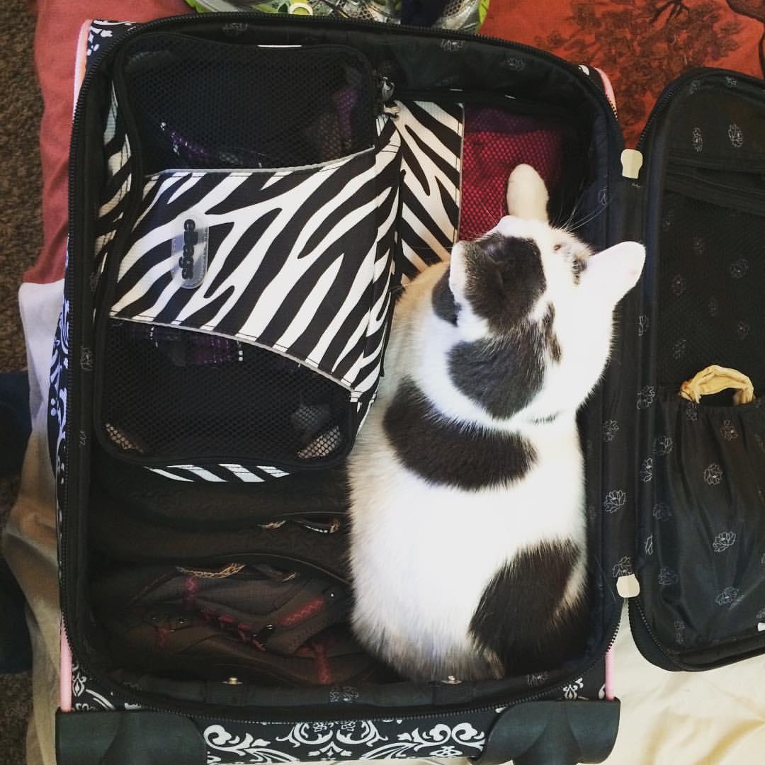 abbey-suitcase-1
