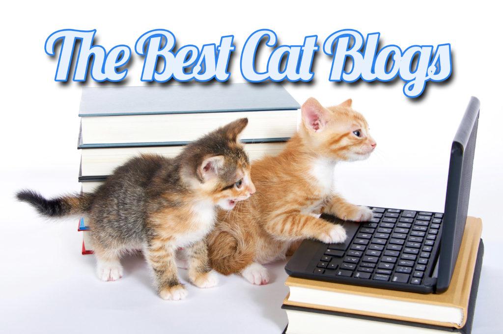 Best Cat Blogs