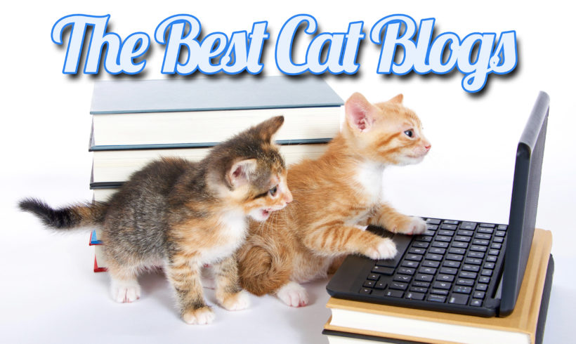 The Best Cat Blogs…For Your Reading Pleasure!