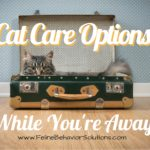 Cat Care Options While You're Away