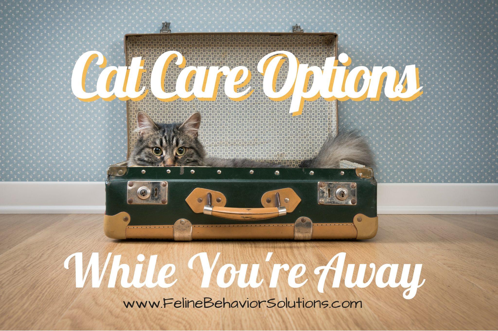 Cat Care Options