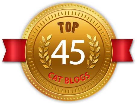 Top 45 Cat Blogs