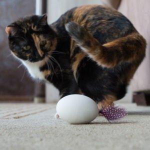 Tech-Inspired Cat Gifts - SHRU