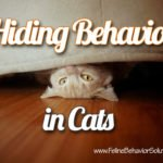 Hiding Behavior in Cats
