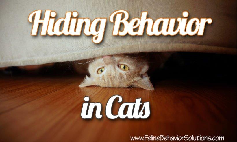Hiding Behavior in Cats