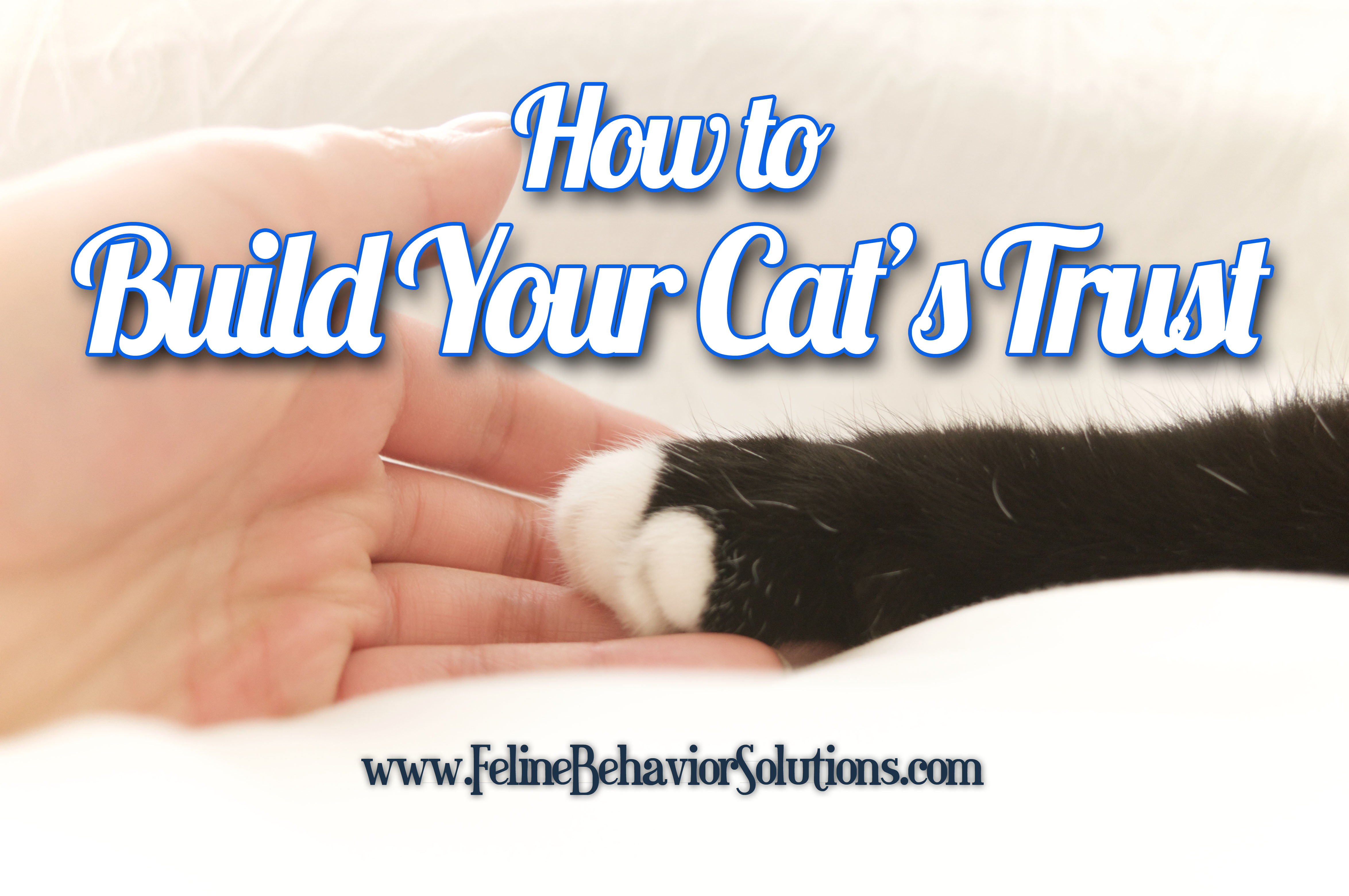Build Your Cat's Trust