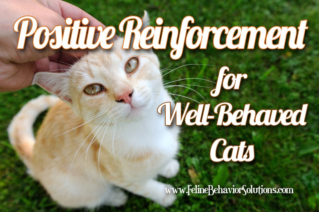 Positive Reinforcement for Good Cat Behavior