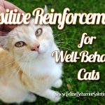 How to Use Positive Reinforcement for Good Cat Behavior