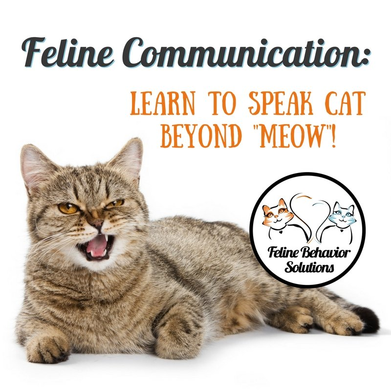Feline Communication Workshop