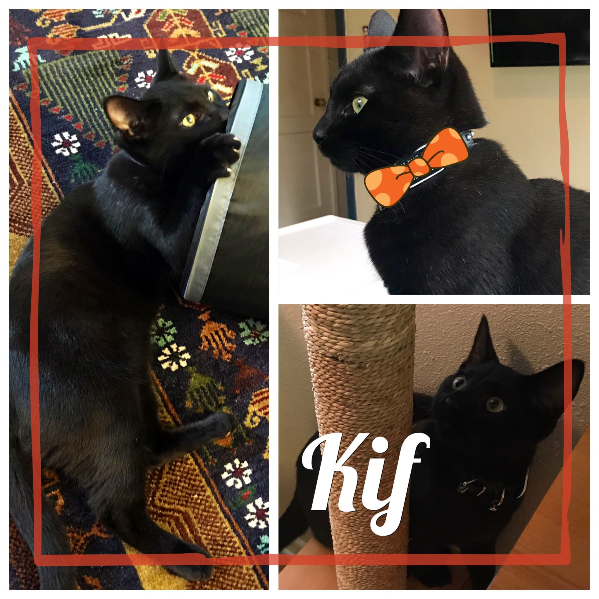 Kif-Collage