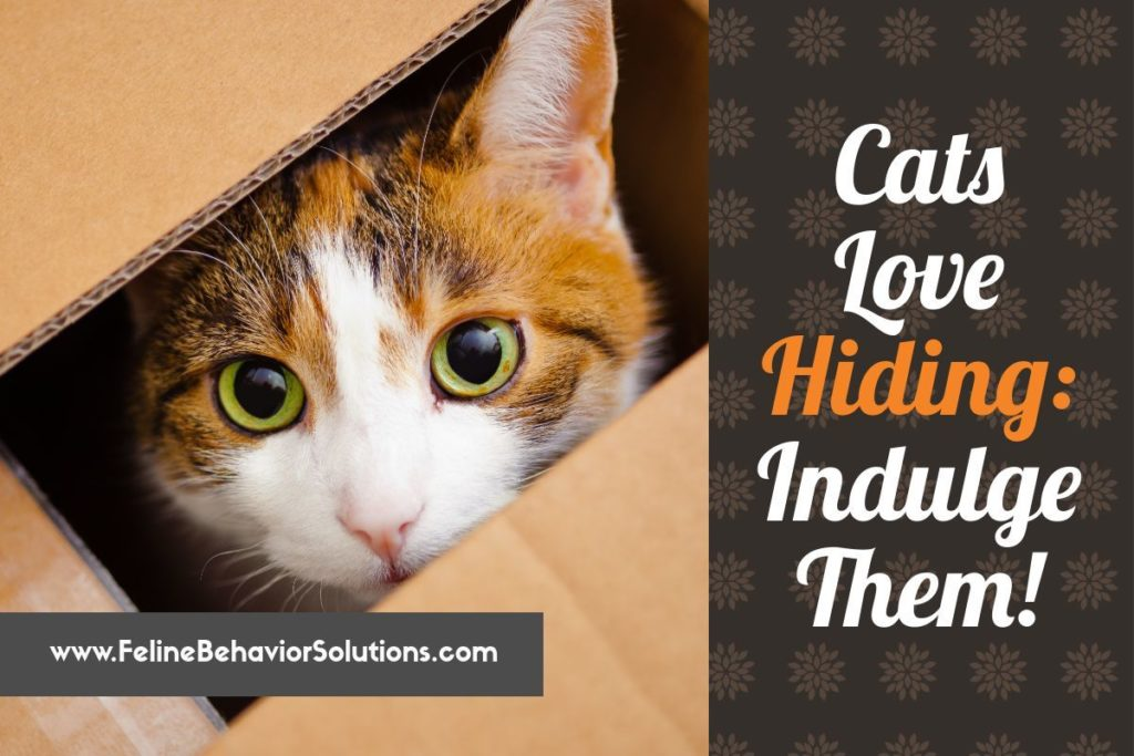 Cats Love Hiding