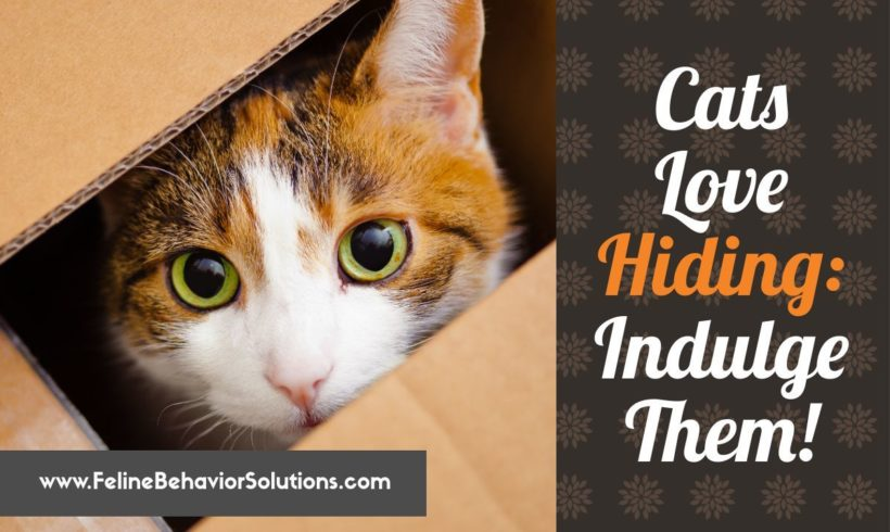 Cats Love Hiding – Indulge Them!