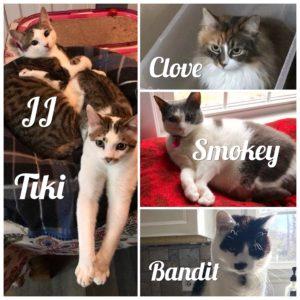 Langan Cats