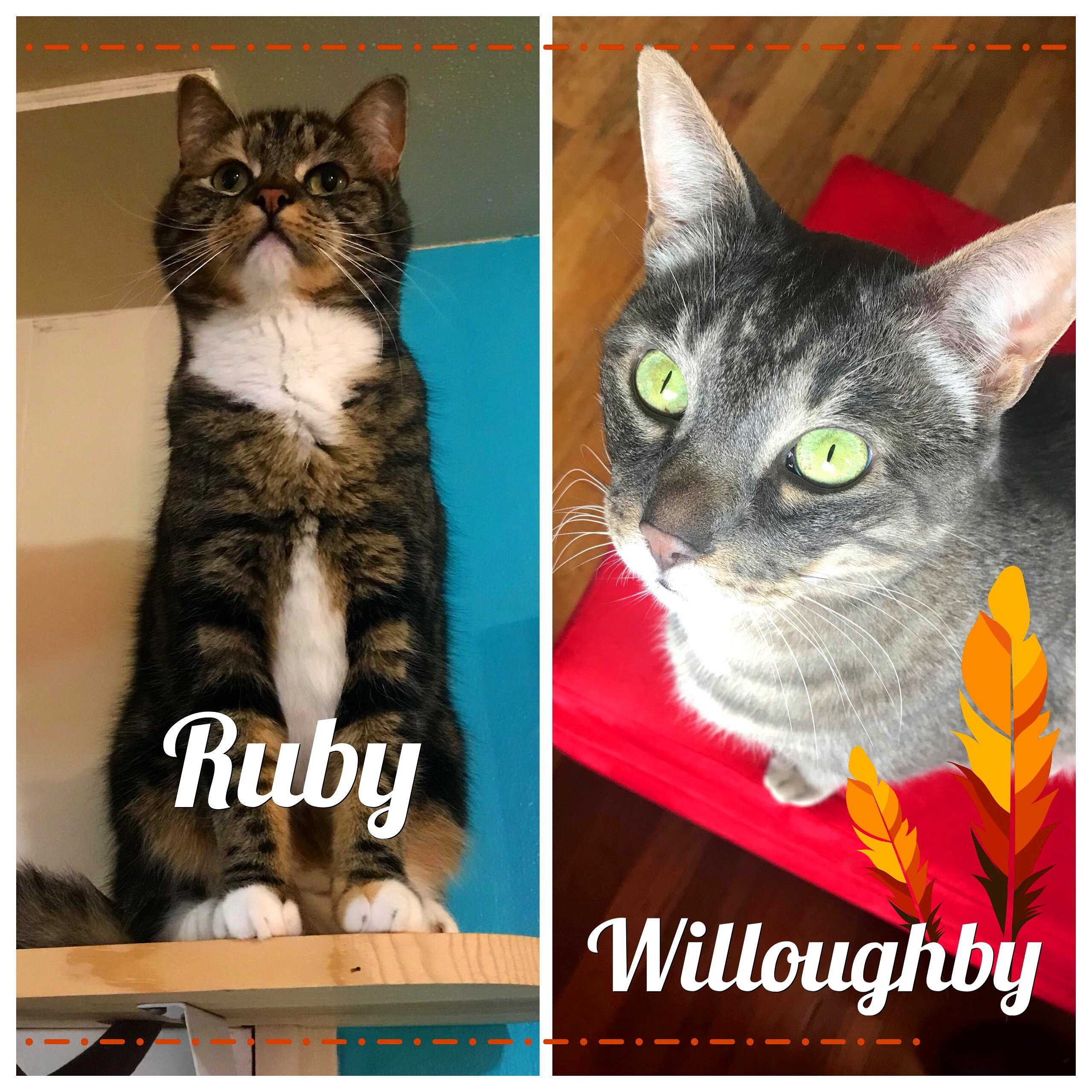 Ruby-Willoughby