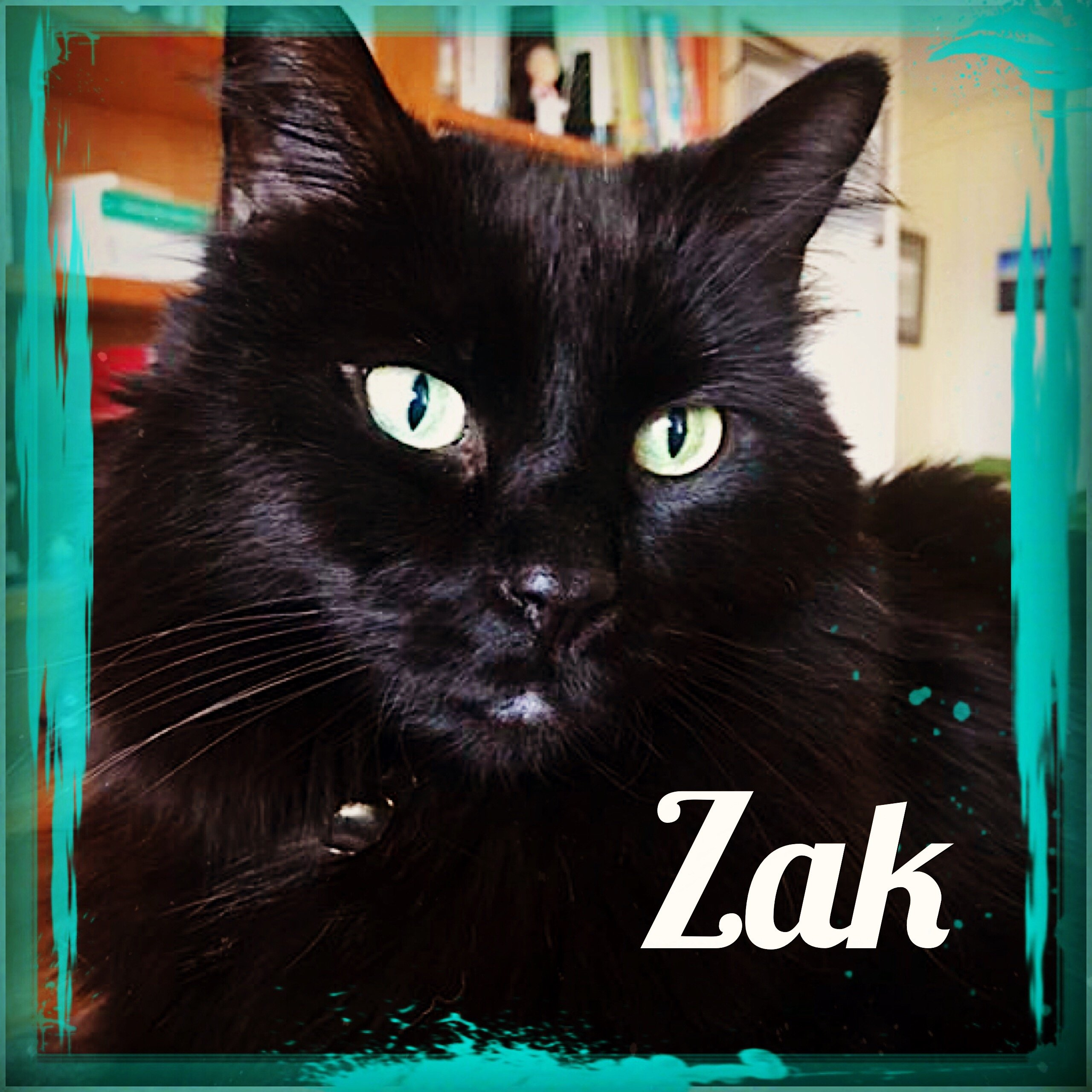 Zak – Feline Behavior Solutions Testimonial